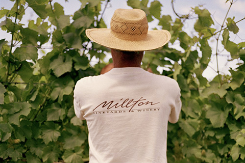 The Millton Vineyard